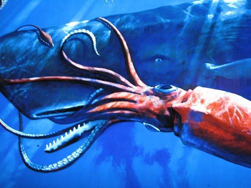 .::Calamar Colosal::. Calamar