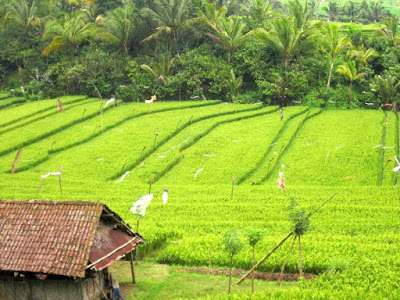 Bali Travel: House on a Rice Field in Ubud