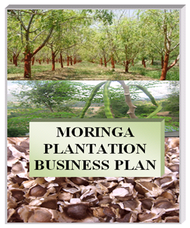 Moringa Business Plan