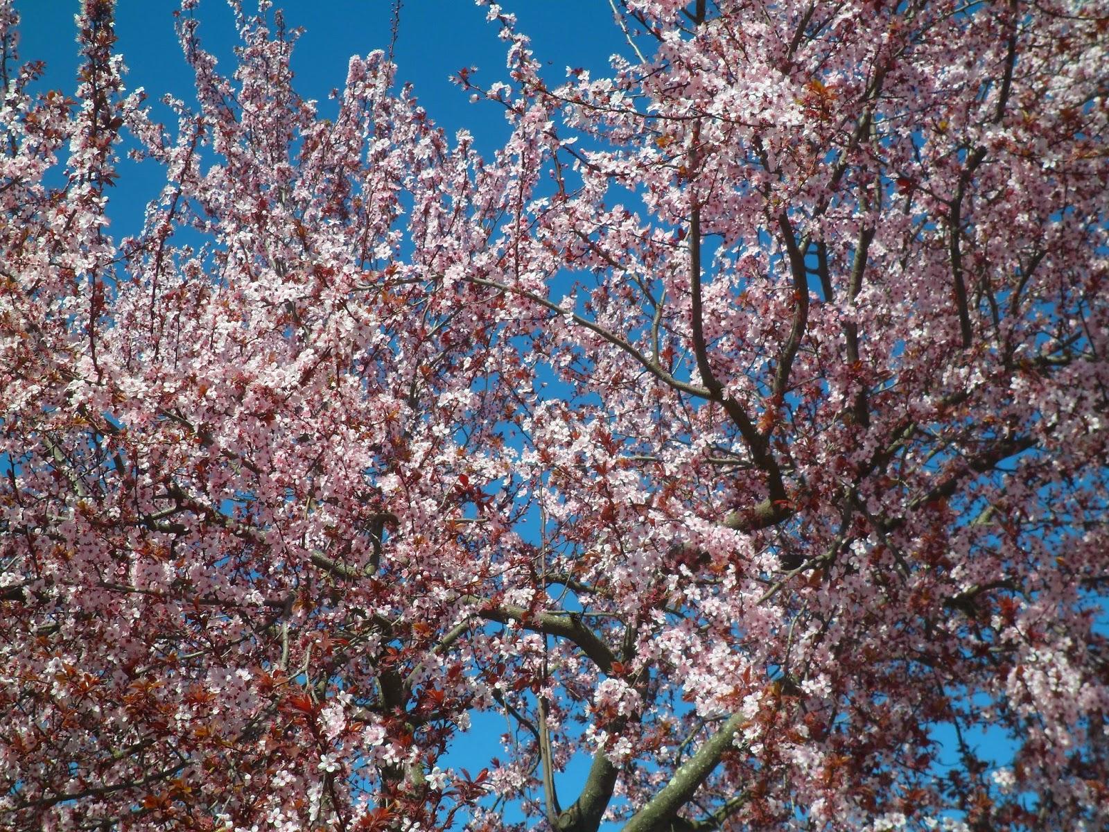 (Quase) Primavera.