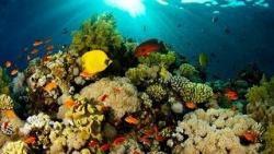 sfondi mare e pesci 19