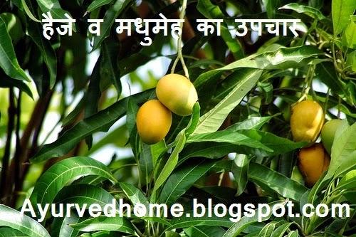 Treatment of Diabetes and Cholera with mango leaf,  हैजे व मधुमेह का आम के पत्तों से उपचार