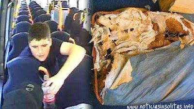 se come el asiento de un autobús
