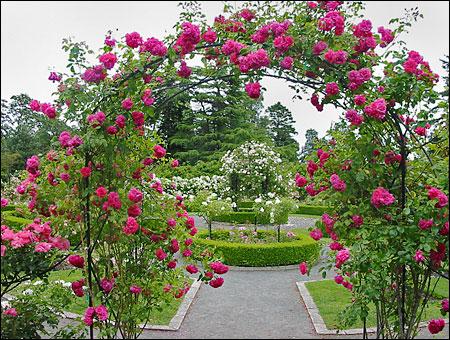 Тайната градина Garden_path