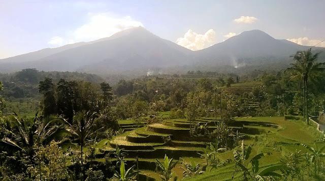 Bali Reisterrassen (Kundenfoto)
