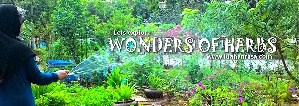 Wonders of Herbs