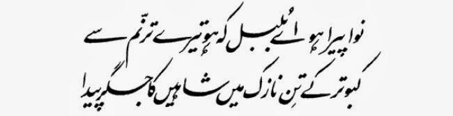 Essay for kids in urdu