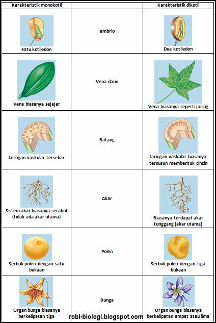 Perbedaan monokotil dengan dikotil - BELAJAR BIOLOGI