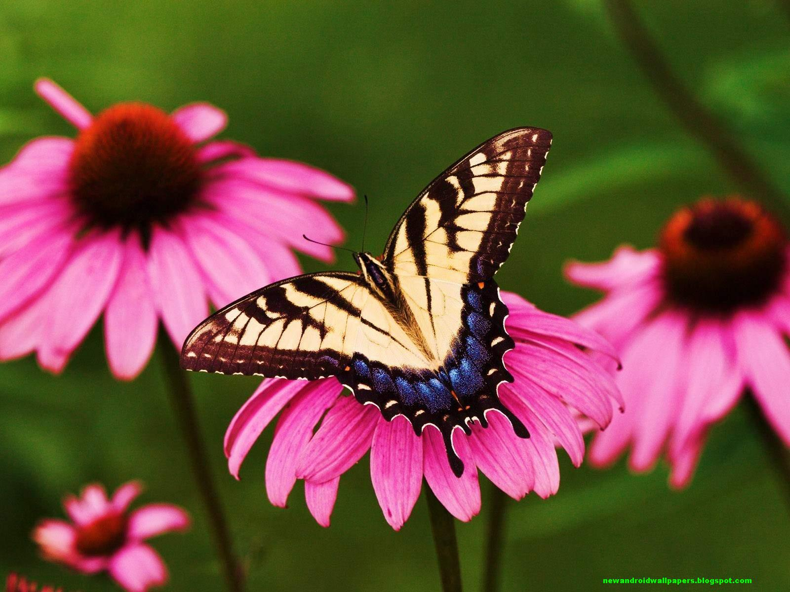 beautiful hd butterfly on flower wallpapers for desktop 2013 for android