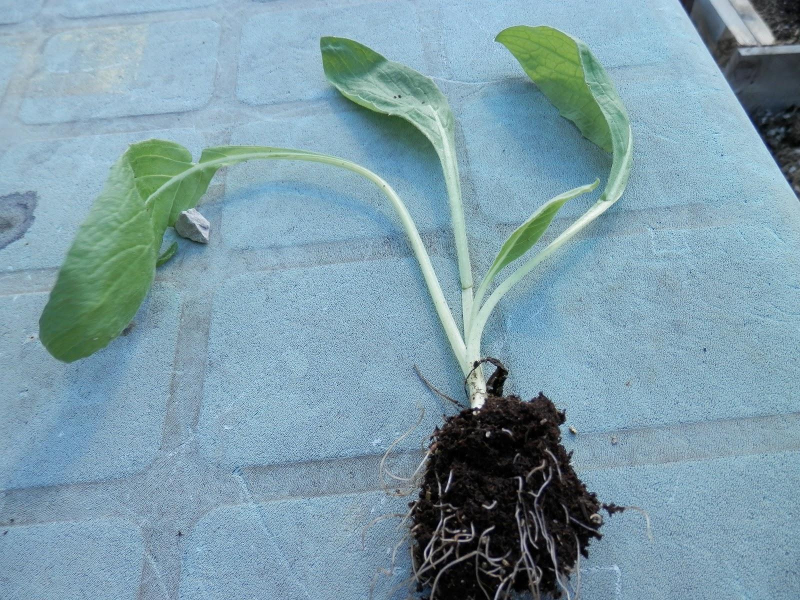 La huerta bricoecologica - Arriate plantas ...