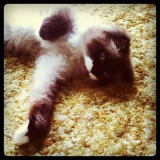 Sonny Cat