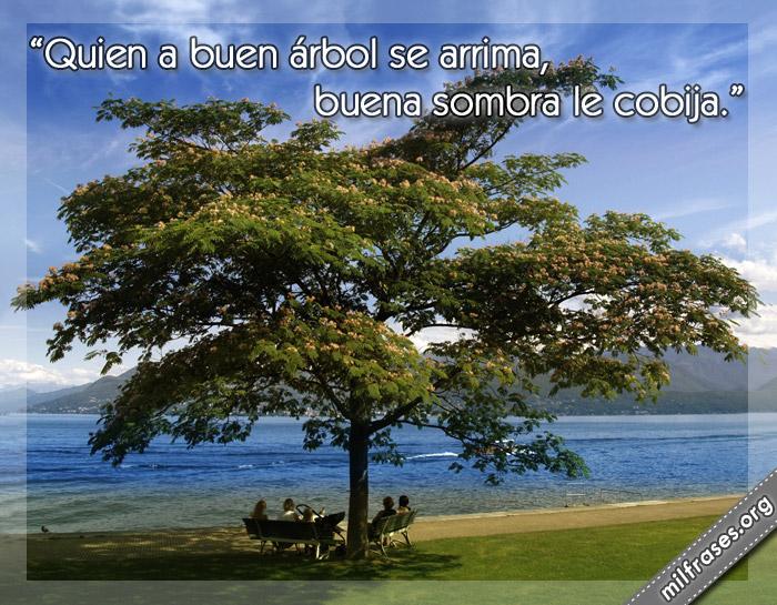 Quien a buen árbol se arrima, buena sombra le cobija. frases, refranes, dichos, pensamientos y reflexiones