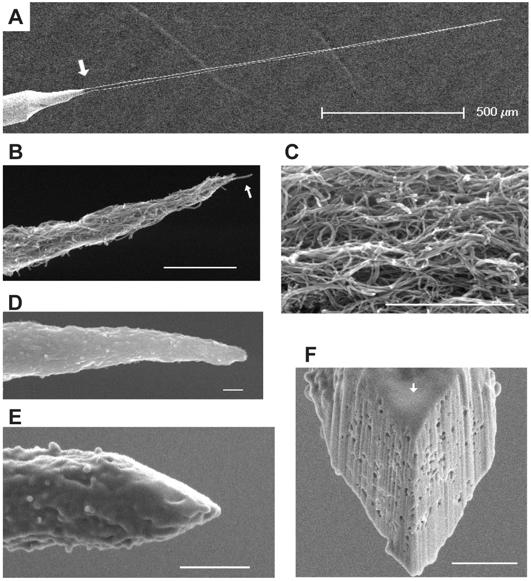 Carbon Nanotube Sensors