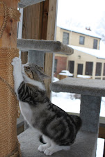 Suburban birds have deadly stalker: your cat