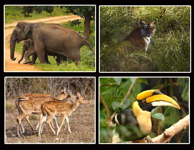 Wildlife-in-Bandipur-National-Park