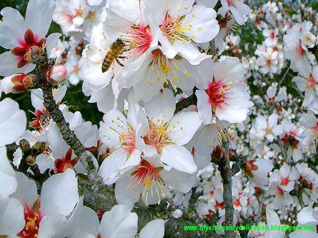 Beauty In Garden