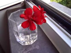 Flores de Maio...