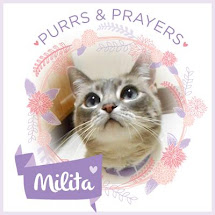 Purrz and Prayers for Milita