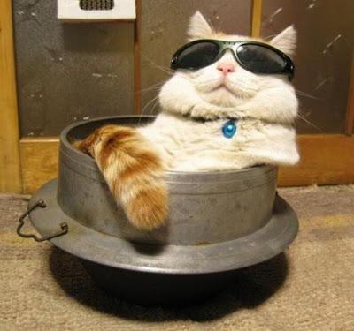 Fakta Ilmiah: Alasan Rasulullah Sangat Sayang Terhadap Kucing