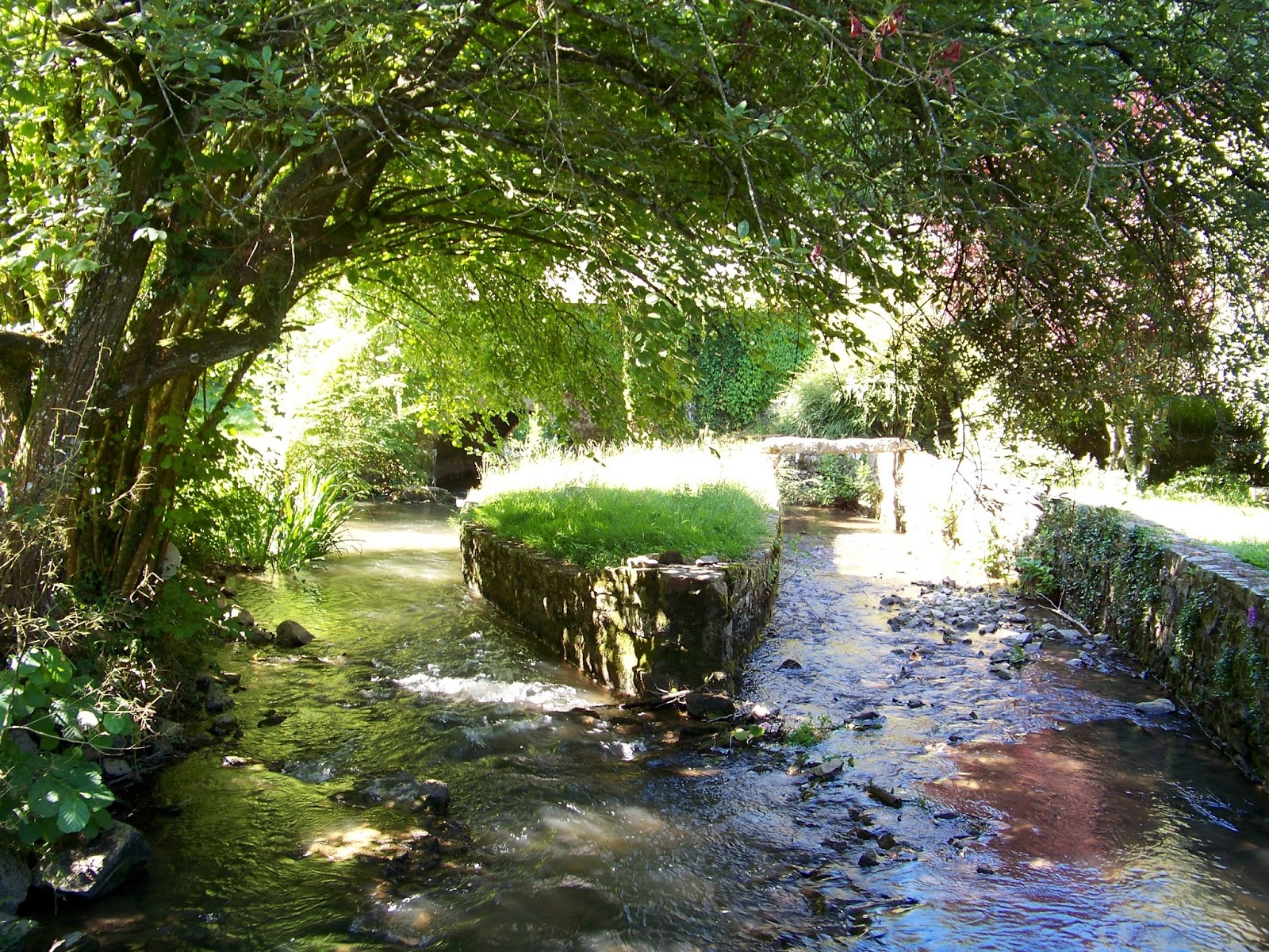 Dans mon jardin et ailleurs a l 39 ombre des arbres - Quel arbre dans mon jardin ...
