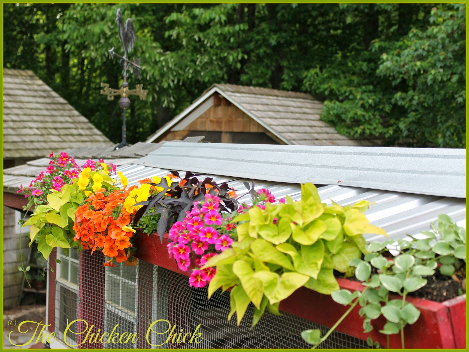 Chicken coop flower box.