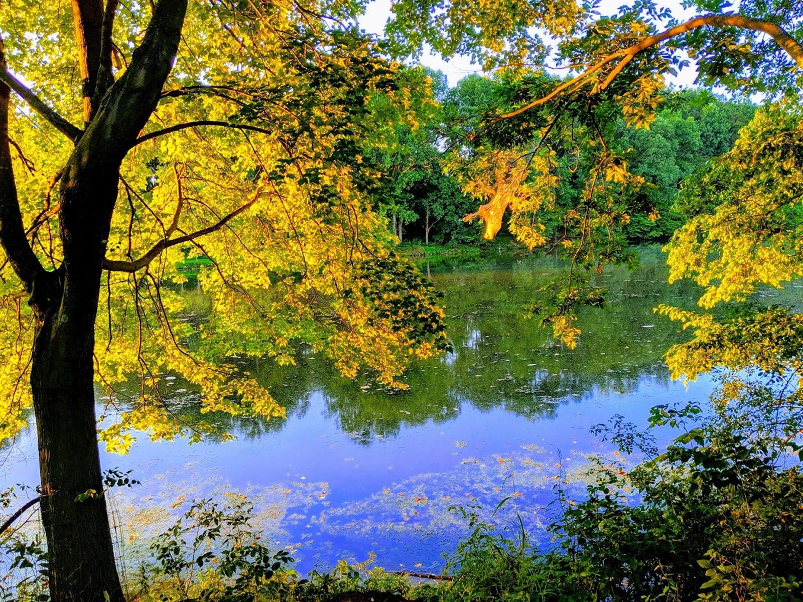 Lake Elkhorn morning