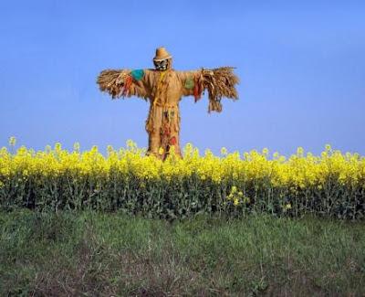 odd jobs: human scarecrow