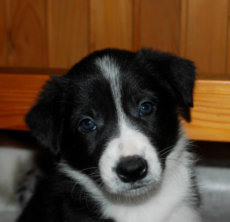 Addestramento ed educazione dei cuccioli e del cane adulto for Cucciolo di talpa
