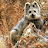 В Синцзяне впервые за 22 года зоологи обнаружили кролика редкой породы
