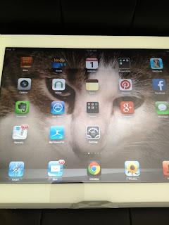 cat as screensaver on iPad2