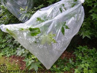 Idea P P Sains Membuktikan Tumbuhan Berpeluh Transpirasi