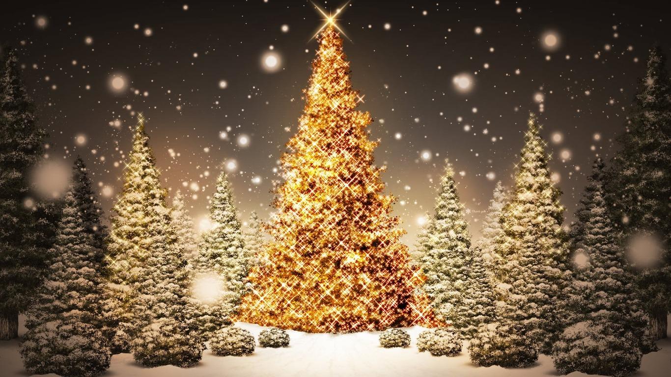 http://1.bp.blogspot.com/-u7vE9iMUXqk/TrEyM9CxkrI/AAAAAAAAMJs/ClG20qdxovc/s1600/1320235395_sparkling_christmas_trees.jpg