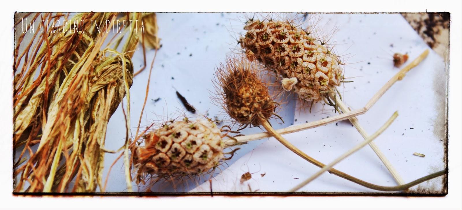 Voglia di fiori e semine in giardino un giardino in diretta for Semi di fiori