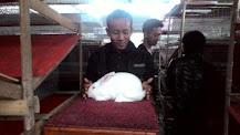 Eko Rabbit