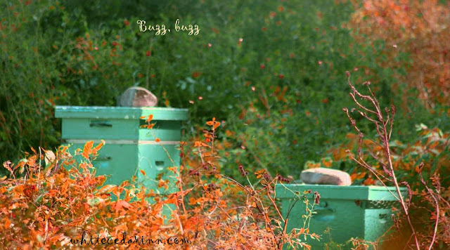 beehives at Gilsland Farm