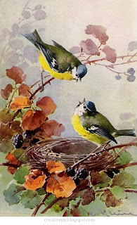 Catherine klein птицы