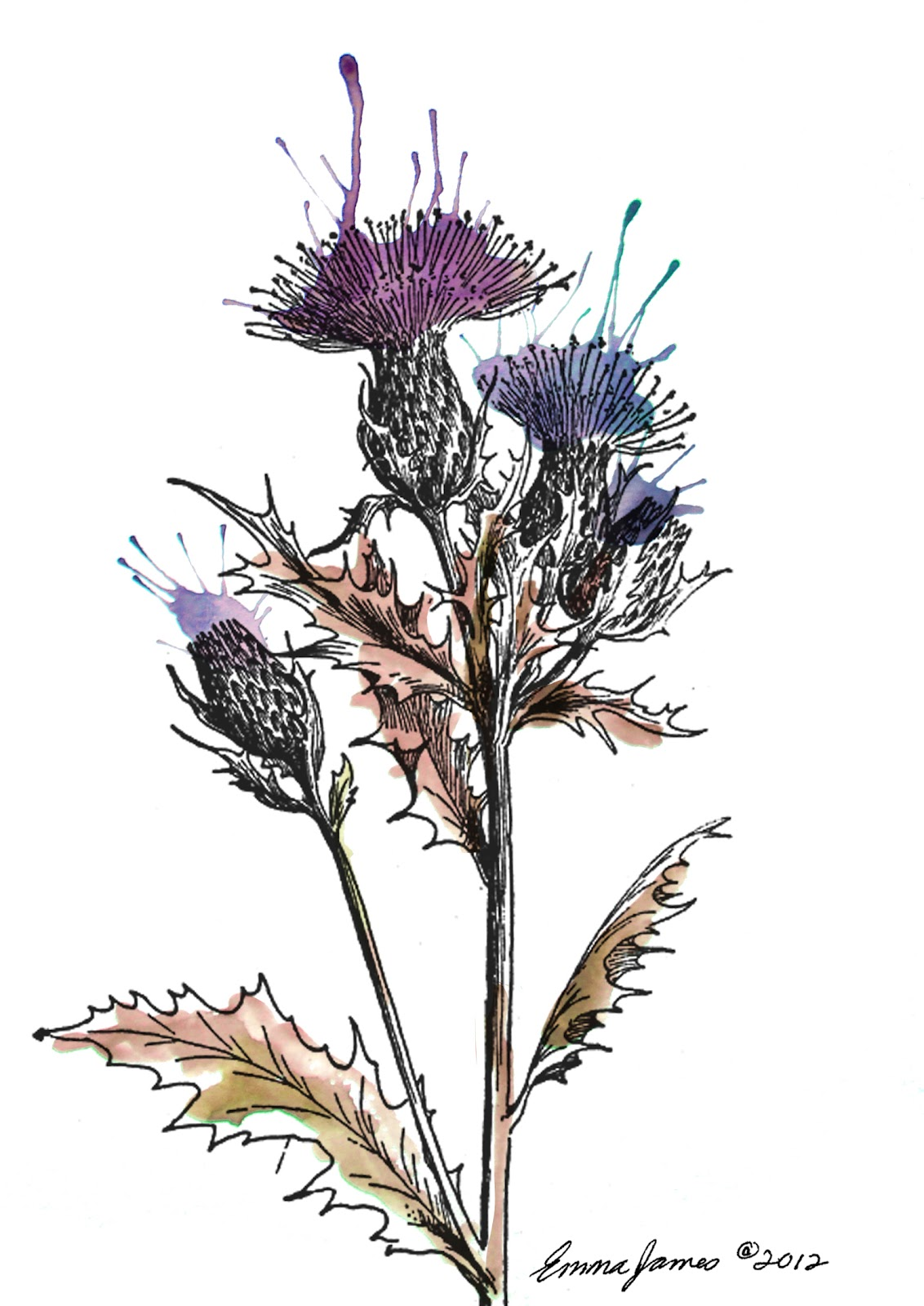Flower of Scotland - Wikipedia