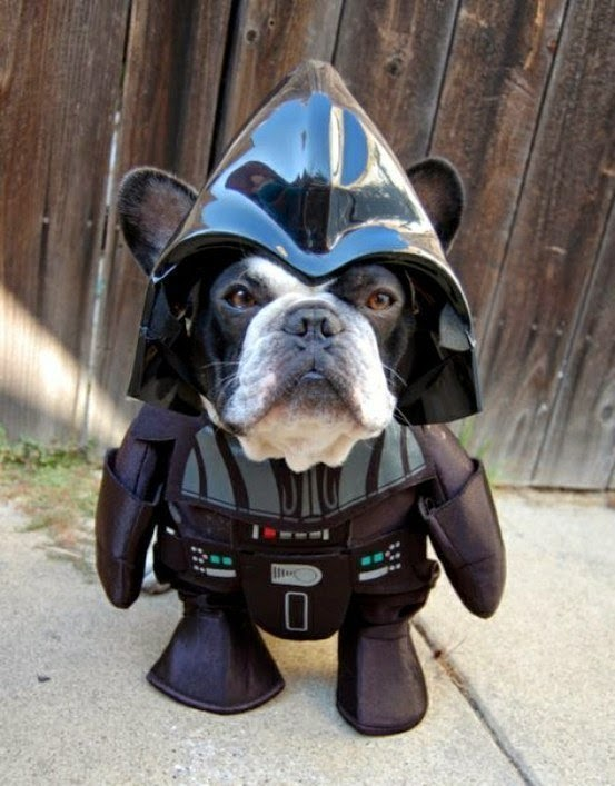 star wars pet costume-darth vader