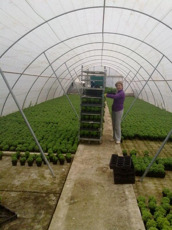 Asociaci n san pedro de sotogordo el cultivo de la albahaca for Cultivo de albahaca en interior