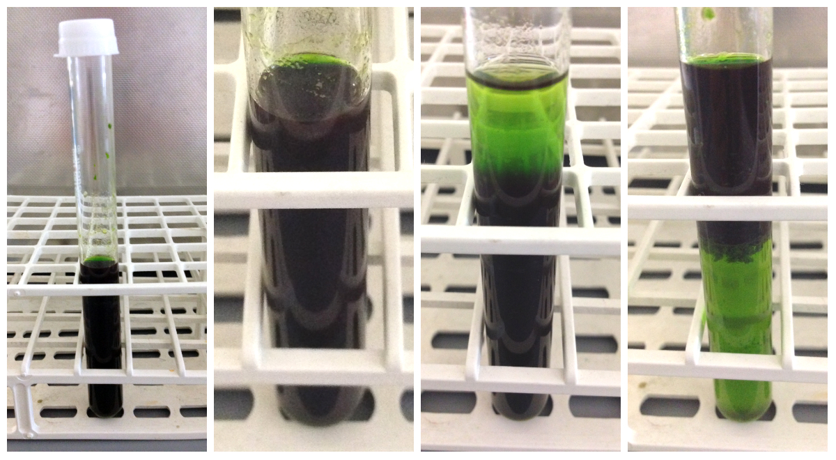 chromatography of different leaf extracts Phytochemical and gc-ms analysis of leaf extract of of phytoconstitutens was carried out using thin layer chromatography method by different detecting.