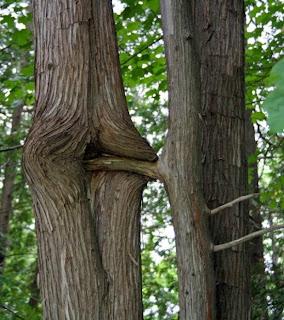 Tree Having Sex Symol