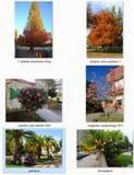 Traballos das árbores CS