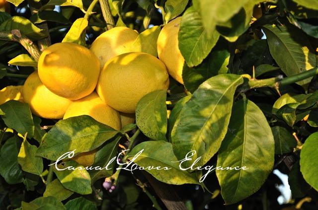 """""""A Lemony Life"""""""