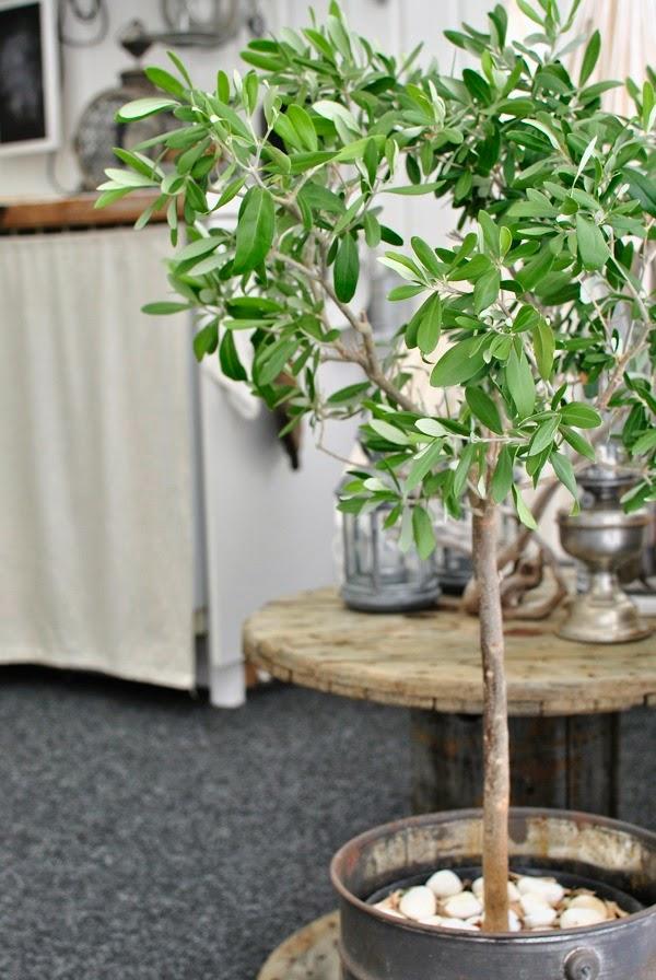 Hannas olivträd plåthink kabeltrumma uterum