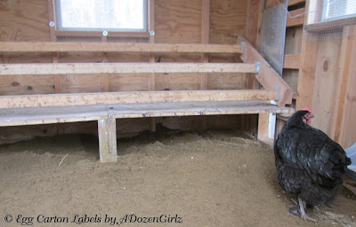 Using droppings boards helps remove moisture from the chicken coop daily, keeping it drier, reducing the risk of frostbite and bumblefoot infections.