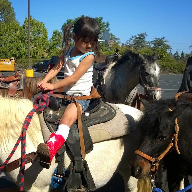Spring Fling pony rides