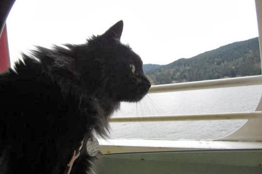 cat on the ferry to vancouver island