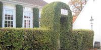 http://www.havefolket.com/2012/10/nyd-efteraret-i-den-gamle-by.html