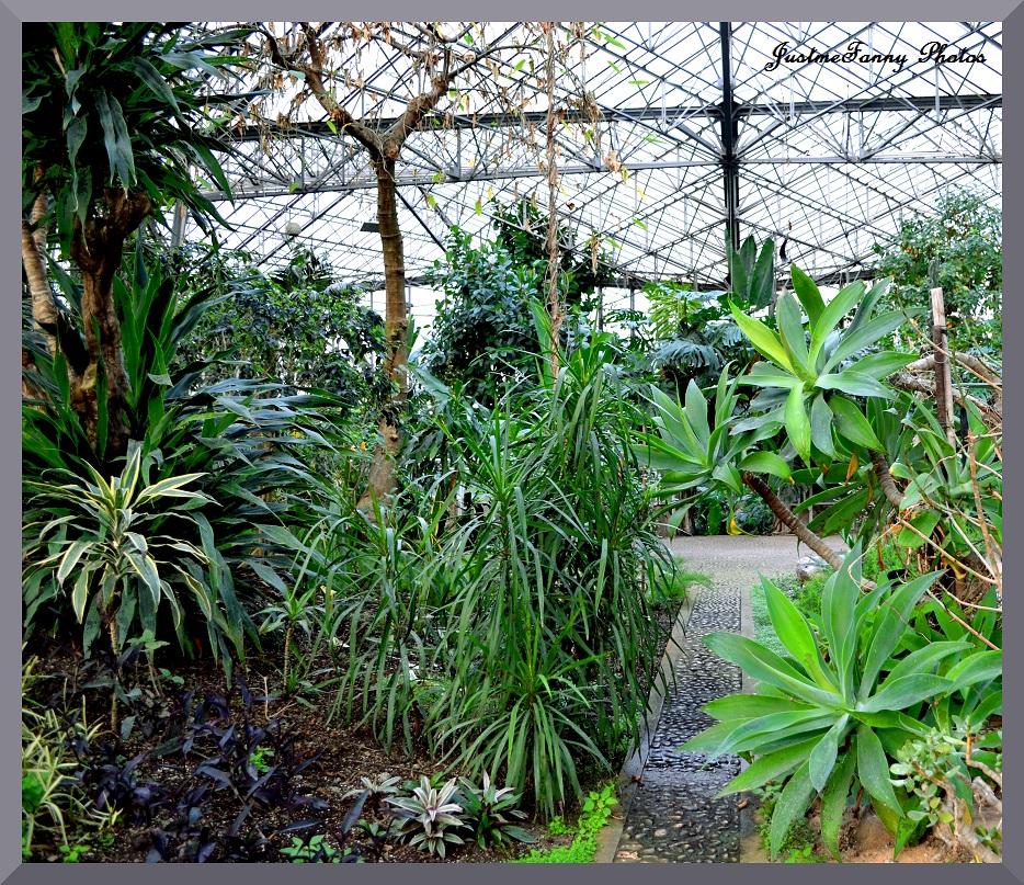 La galerie de fanny plantes exotiques for Jardin du plantes
