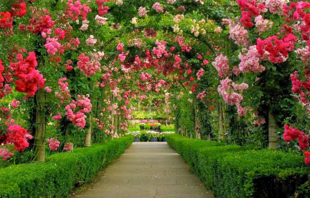 fotos flores maravilhosas